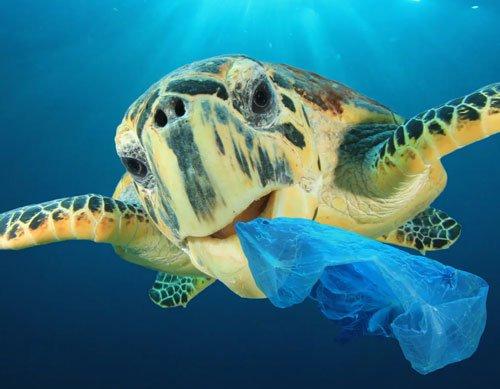 أضرار البلاستيك على الحياة البحرية