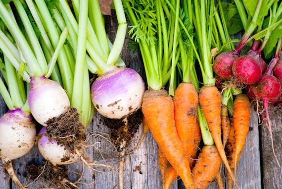 الخضروات-الجذرية