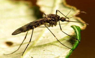 الزعتر-للتخلص-من-الحشرات
