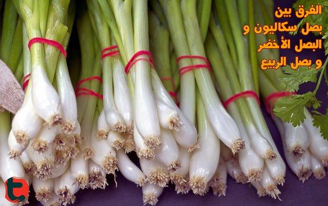 البصل الاخضر بصل سكاليون بصل الربيع ما هو الفرق و كيف نميز بينهم توعية