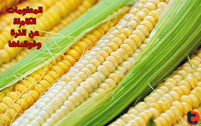 الذرة المعلومات الغذائية الكاملة والفوائد الصحية توعية