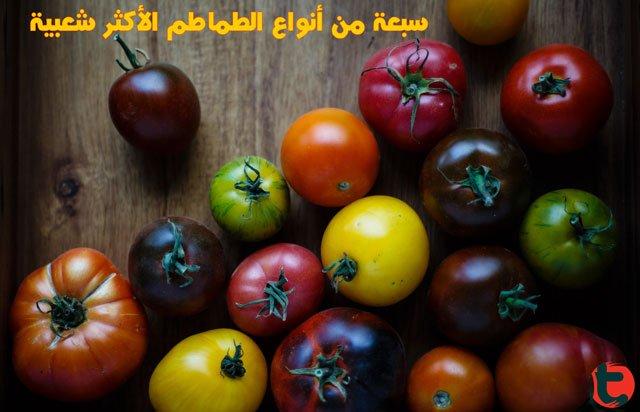 7 أنواع ذات شعبية من الطماطم البندورة وكيفية استخدامها توعية